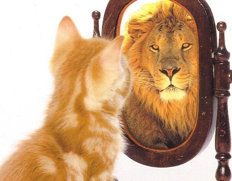 gatto-che-si-vede-leone